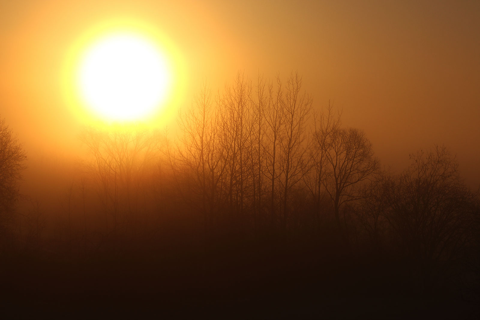 Светило.Деревья тянутся к солнцу